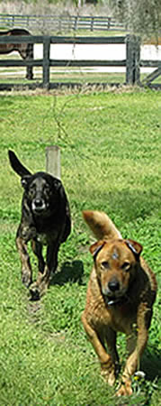 Sponsor Shadow & Brewster